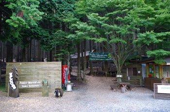 05-forest-adv.jpg