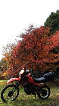 059-bike.jpg