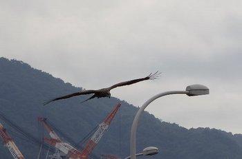 41-bird.jpg