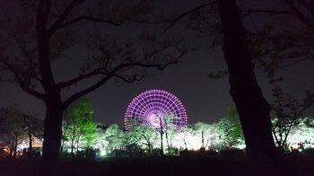 011-sakura.jpg